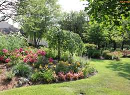 Front yard landscape plant bed with yellow daylily and knock out roses