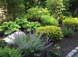 Plant bed with a combination of evergreen and deciduous shrubs