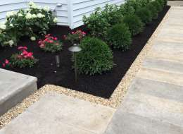 Traditional planting with boxwoods, rosses and hydrangea plants
