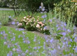 Perennial plant bed with drift rose's landscape design